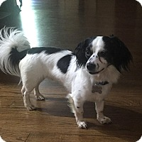 Adopt A Pet :: Freckles - Beavercreek, OH
