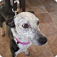 Adopt A Pet :: Winni (adoption pending) - Pataskala, OH
