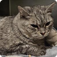 Adopt A Pet :: Sara - Grants Pass, OR