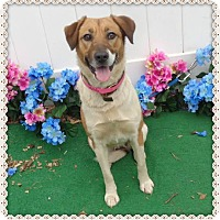 Adopt A Pet :: KENDALL-avail 01/25 - Marietta, GA