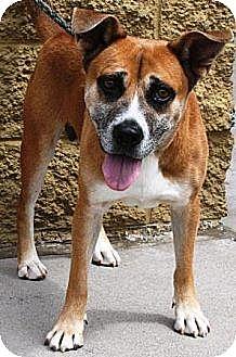 Australian Shepherd/Shepherd (Unknown Type) Mix Dog for adoption in Gilbert, Arizona - CK