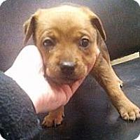 Adopt A Pet :: Matilda - Norman, OK