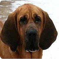 Adopt A Pet :: DAISEY - Georgetown, KY