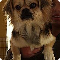 Adopt A Pet :: Chuy - Temecula, CA