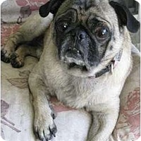 Adopt A Pet :: Brutus - Windermere, FL