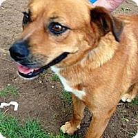Adopt A Pet :: Adrianna - Scottsdale, AZ