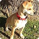 Adopt A Pet :: Thump