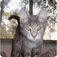 Adopt A Pet :: Kitten1 - Orlando, FL