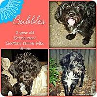 Adopt A Pet :: Bubbles - San Antonio, TX