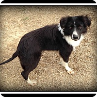 Adopt A Pet :: Jasmine - Indian Trail, NC