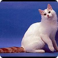 Adopt A Pet :: Basil - Davis, CA