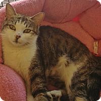 Adopt A Pet :: Serabi - Horsham, PA