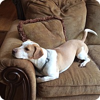 Adopt A Pet :: Telula- Courtesy Post - Alpharetta, GA