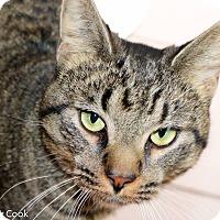 Adopt A Pet :: Huey - Ann Arbor, MI