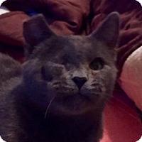 Adopt A Pet :: Gracie - Yorba Linda, CA
