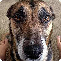 Adopt A Pet :: Penelope - Oakley, CA