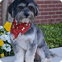 Adopt A Pet :: Binks - Abilene, TX