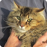 Adopt A Pet :: Tody - Germantown, MD