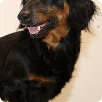 Adopt A Pet :: Izzie~adopted! - Glastonbury, CT