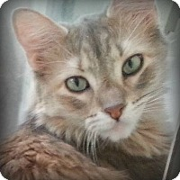 Adopt A Pet :: Helen - Tucson, AZ