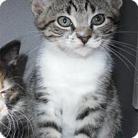 Adopt A Pet :: Kaya - Waupaca, WI