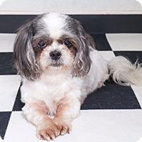 Adopt A Pet :: China - Sudbury, MA