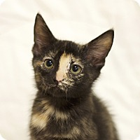 Adopt A Pet :: Erin - Sioux Falls, SD