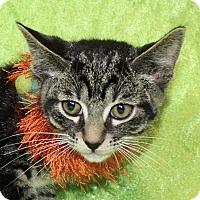 Adopt A Pet :: Liz - Jackson, MI