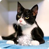 Adopt A Pet :: Bernadette - Austin, TX