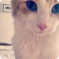 Adopt A Pet :: COURTESY POST - SULLIVAN - Royal Oak, MI