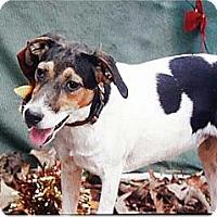 Adopt A Pet :: Bree - Manchester, NH