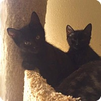 Adopt A Pet :: Winnie 2 - Bulverde, TX