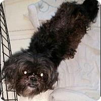 Adopt A Pet :: Jasmine - Adoption Pending - Fairfield, OH