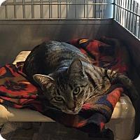 Adopt A Pet :: Francine - Lafayette, NJ
