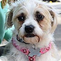 Adopt A Pet :: Ricky Lee - Memphis, TN