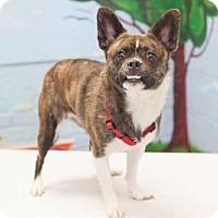 Adopt A Pet :: Willie - Bellbrook, OH
