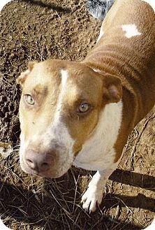 Beagle/Hound (Unknown Type) Mix Dog for adoption in Moulton, Alabama - Honey