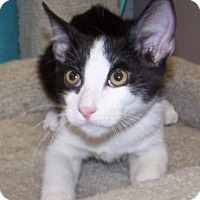 Adopt A Pet :: K-Wilma3-Emilio - Colorado Springs, CO