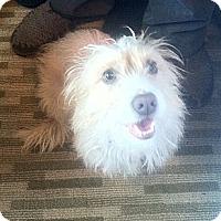Adopt A Pet :: Princess - Sherman Oaks, CA