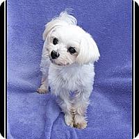 Adopt A Pet :: Hudson - Ft. Bragg, CA