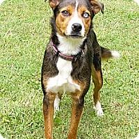 Adopt A Pet :: Nellie - Mocksville, NC