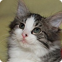 Adopt A Pet :: Barney - Xenia, OH