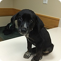 Adopt A Pet :: Alpha - Cumming, GA