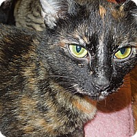 Adopt A Pet :: Salem - Medina, OH