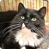 Adopt A Pet :: Joseph - Paris, ME
