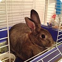 Adopt A Pet :: Bonnie - Conshohocken, PA