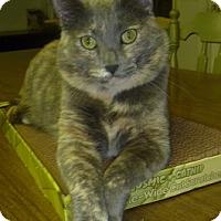 Adopt A Pet :: Shangrila - Hamburg, NY