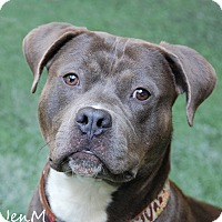 Adopt A Pet :: Kovu - Burlingame, CA