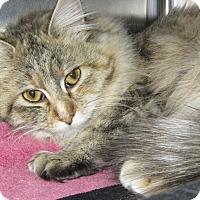 Adopt A Pet :: Chloe - Ridgway, CO