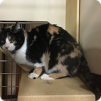 Adopt A Pet :: Mandy - Riverside, CA